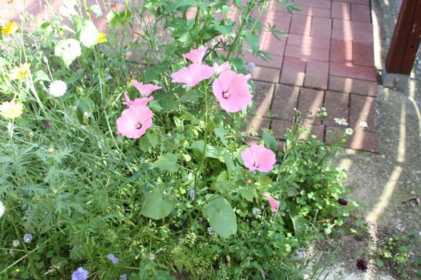 Blume 2 - (Garten, Pflanzen, Blumen)