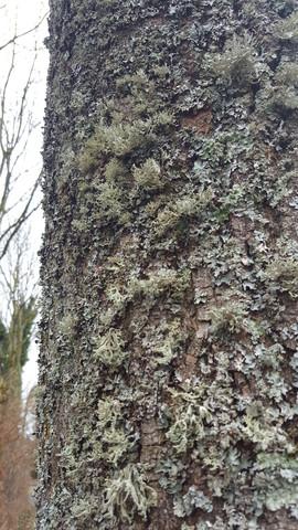 Bild 3 - (Natur, Umwelt, Baum)
