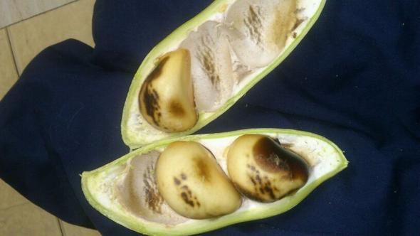 """das sind die """"kerne"""" in der frucht  - (Australien, Früchte, exotische Früchte)"""