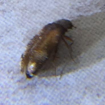 Um welche Insekten-Art handelt es sich hier?