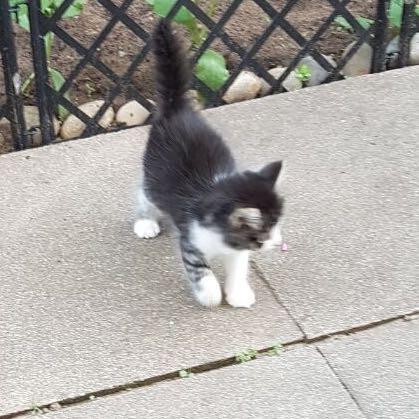 Bild 1 - (Tiere, Katze, Katzen)