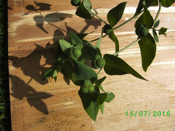 Mir unbekannte Pflanze  - (Biologie, Pflanzen, Botanik)