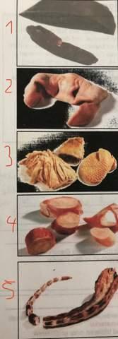 Um welche Schweineinnereien/-organe handelt es sich hier?