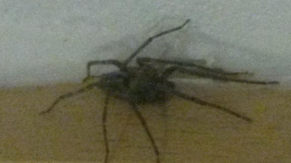 da ist sie - (Natur, Spinnen)