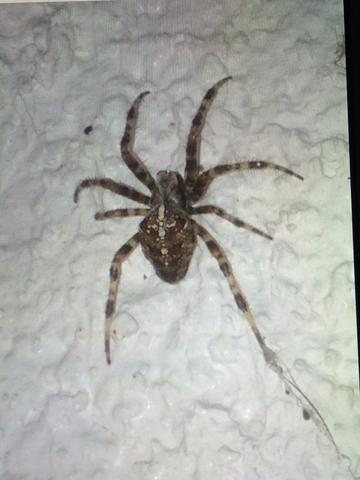 Um welche Spinne handelt es sich hier? Foto im Anhang (Tiere ...