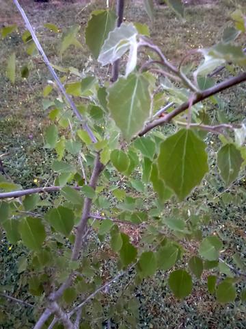 Bild1 - (Garten, Baum, Wald)