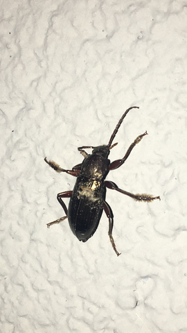 Käfer - (Tiere, Kaefer)
