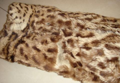 Detail Arm - (Pelz, Leopard, Raubkatzen)