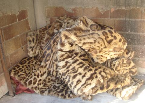 Jacke - (Pelz, Leopard, Raubkatzen)