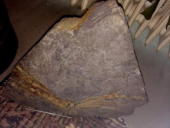 Fossil - (Mineralien, Fossilien)