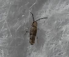 Bild3 - (Insekten, fühler)
