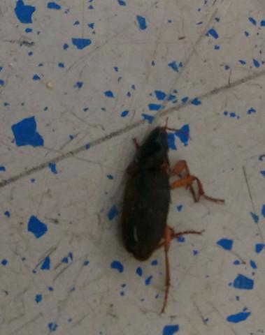 Bild 2 - (Insekten, Schädlinge, Kakerlaken)
