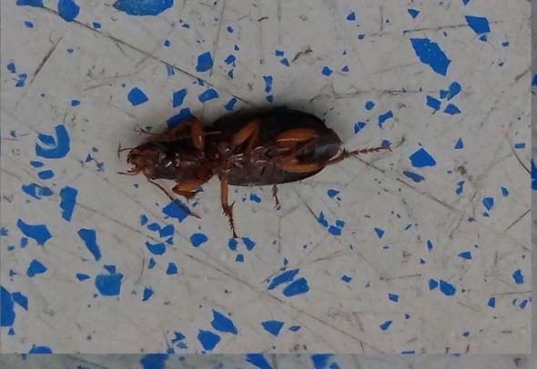 Bild 3 - (Insekten, Schädlinge, Kakerlaken)