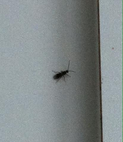 um welches insekt k fer handelt es sich k che insekten. Black Bedroom Furniture Sets. Home Design Ideas