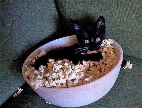 Popcorn, yeah! - (Ernährung, Geschmack, süß)