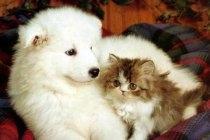 Umfrage: Was ist besser Hund oder Katze?