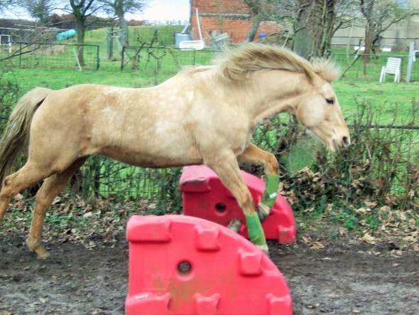 Mein Pferd;) - (Pferde, reiten)