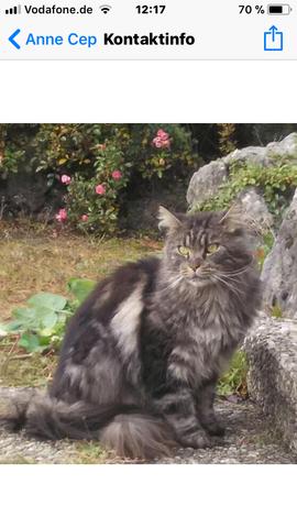 Katze - (Tiere, Katze, Haustiere)