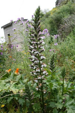 Unbekannt auf Sizilien - (Pflanzen, Blumen)