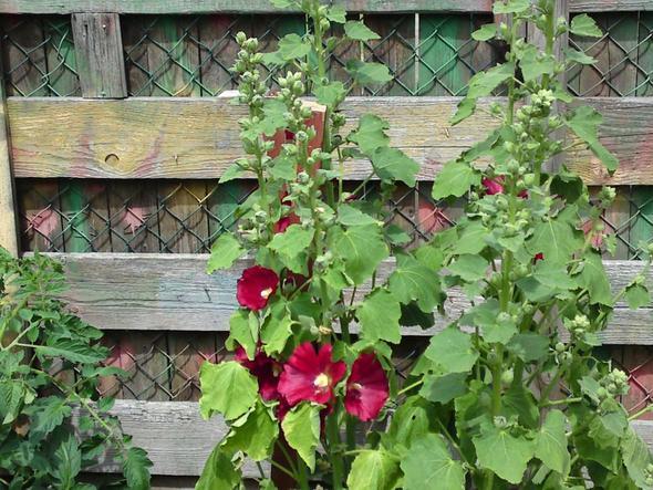 Blume - (Garten, Pflanzen, Botanik)