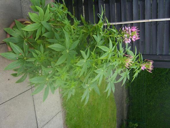 Unbekannte Blume - (Garten, Pflanzen, Blumen)