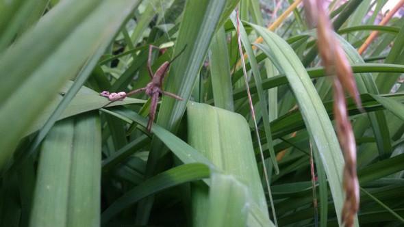Spinne  - (Garten, Natur, Gras)