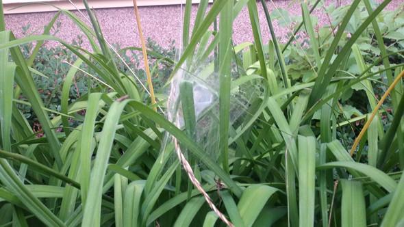 Netz (aus etwa 60cm) - (Garten, Natur, Gras)