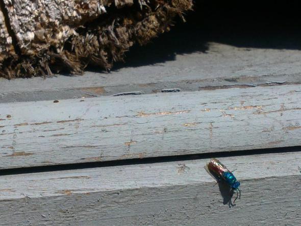 foto zwei - (Insekten, Umwelt)