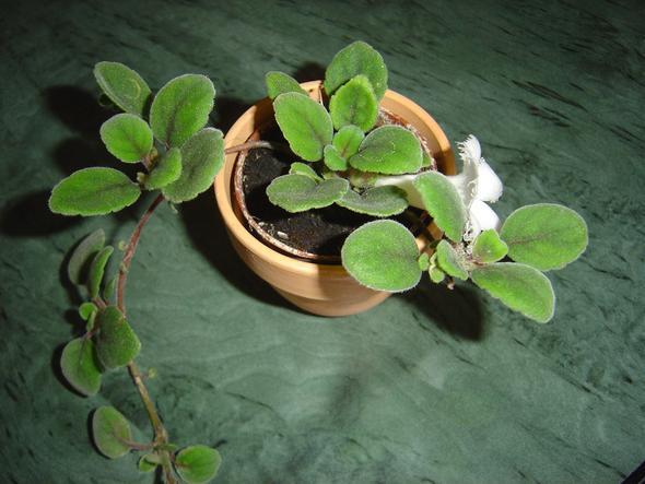 1. Bild - (Pflanzen, Pflanzennamen)