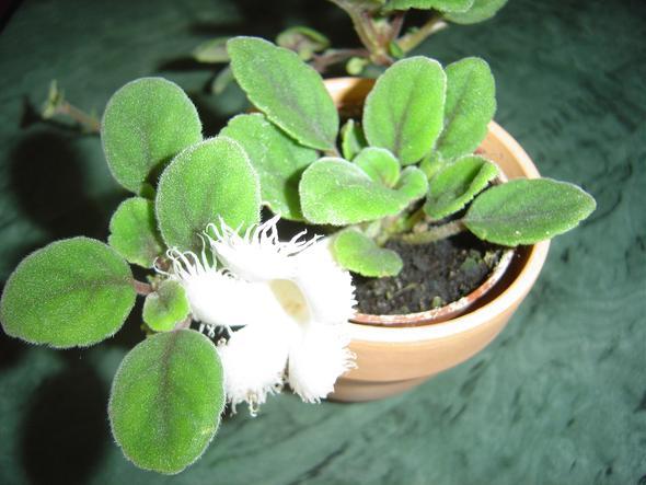 2. Bild - (Pflanzen, Pflanzennamen)