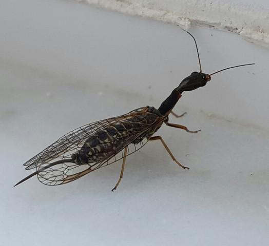 Von oben  - (Tiere, Biologie, Insekten)