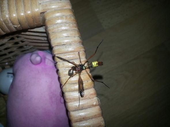 Insekt - (Tiere, Biologie, Insekten)