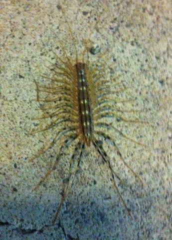 unbekanntes tier tausendf ler tiere biologie insekten. Black Bedroom Furniture Sets. Home Design Ideas
