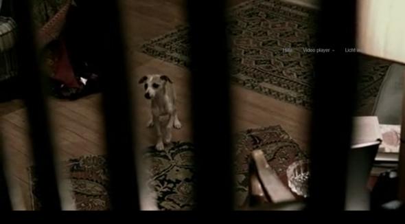 Hund 1 - (Hund, Hunderasse)