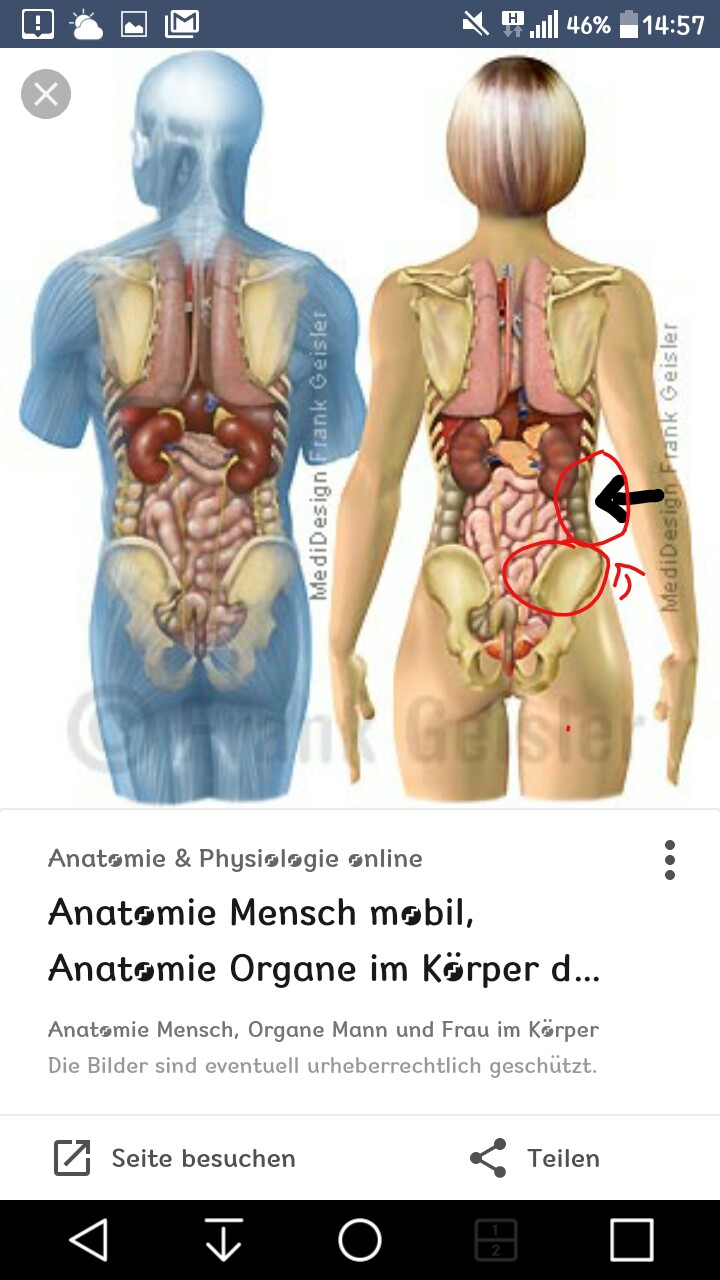 Groß Menschliche Anatomie Und Physiologie Multiple Choice Fragen ...