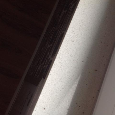 Das sind die Fiecher - (fliegen, Insekten, Ungeziefer)