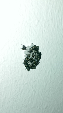 ungeziefer an der wand in der k che was ist das k fer larven kaeferlarven. Black Bedroom Furniture Sets. Home Design Ideas