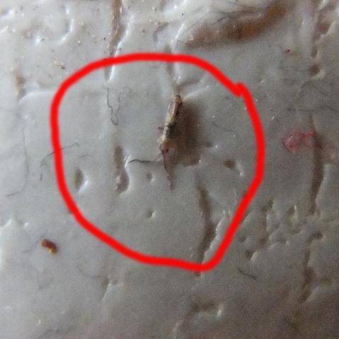 Bett im durchsichtige tiere Mehere Insekten