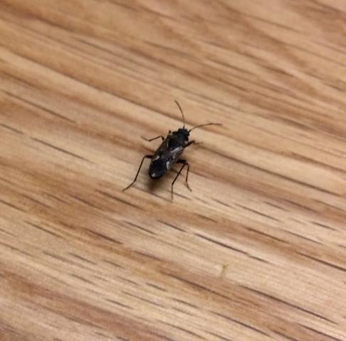 Ungeziefer Im Haus Was Kann Das Sein Insekten