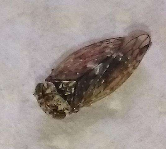 Großes Insekt - (Insekten, Ungeziefer, Schädlinge)