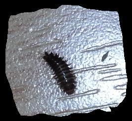 Klick - (Haushalt, Insekten, Ungeziefer)