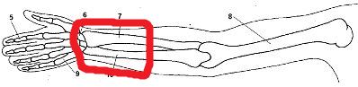 Bereich Arm - (Gesundheit, Training, Muskeln)