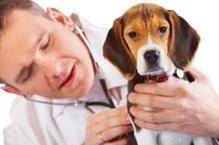 Dr. Hund - (Gesundheit, Beruf, Schweigepflicht)