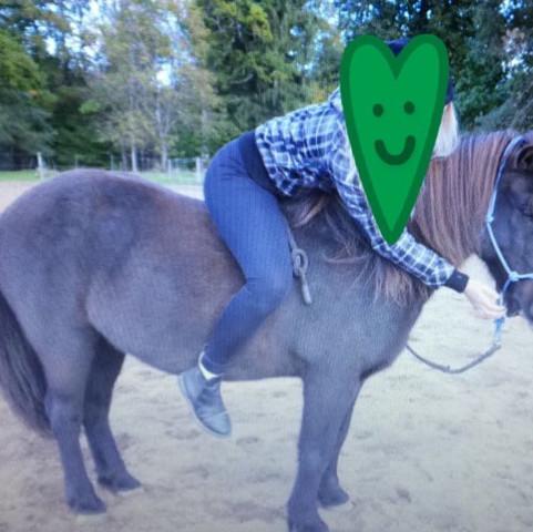12345 - (Pferde, reiten, Reiter)