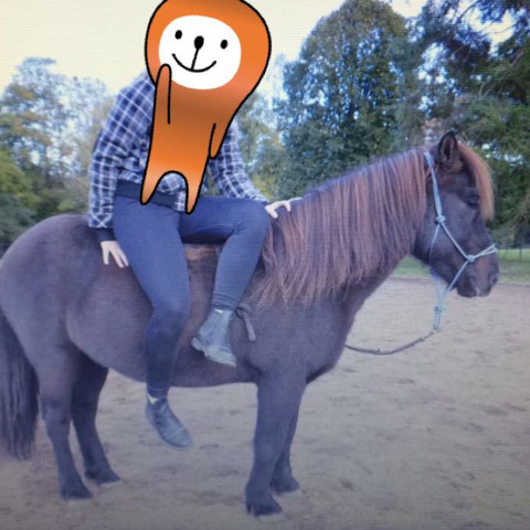 Hier sieht Mans auch gut - (Pferde, reiten, Reiter)