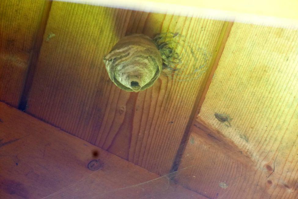 unterschied zwischen hornissen und wespennest wespen nest. Black Bedroom Furniture Sets. Home Design Ideas