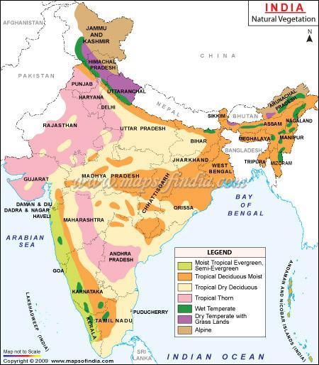 Vegetationszonen Indiens Brauche Hilfe Englisch Indien