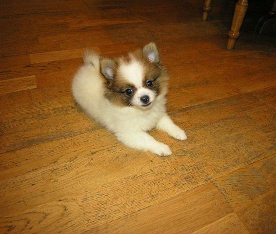 Bild eines Hundes von denen - (Hund, kaufen, Haustiere)