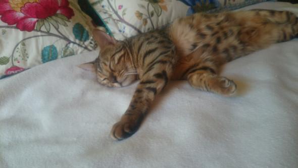 Eine meiner zwei Katzen - (Katzen, Vergesellschaftung)