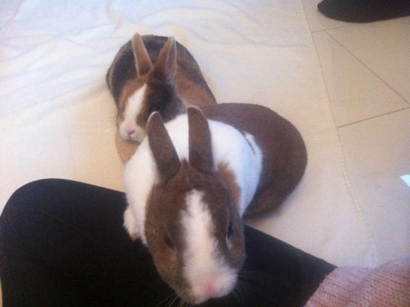 Vergessen meine Kaninchen mich?
